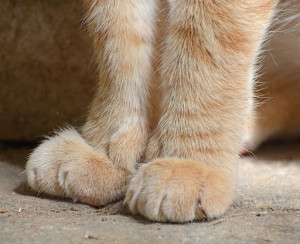 Cat_Paws