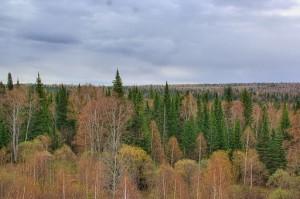 Taiga_in_Zalesovskiy_raion_of_Altai_region_03