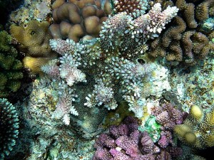 Coral_reefs_papua